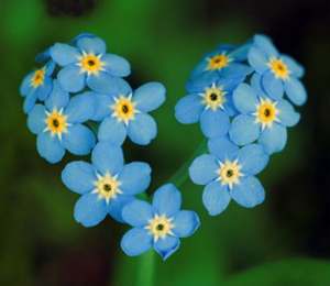 forget_me_not_heart